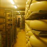 Бактерия в сиренето Ементал удължава живота
