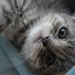 Защо котките обичат галенето по главата, а кучетата не винаги?