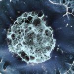 Учени създадоха сърдечен мускул като на зрял човек от стволови клетки
