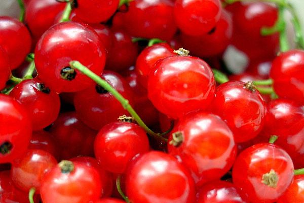 червено френско грозде