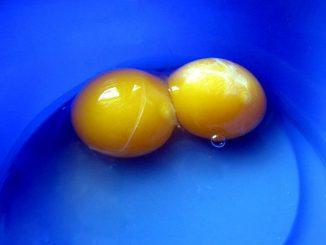 яйчен жълтък