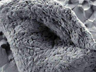 вкаменелост