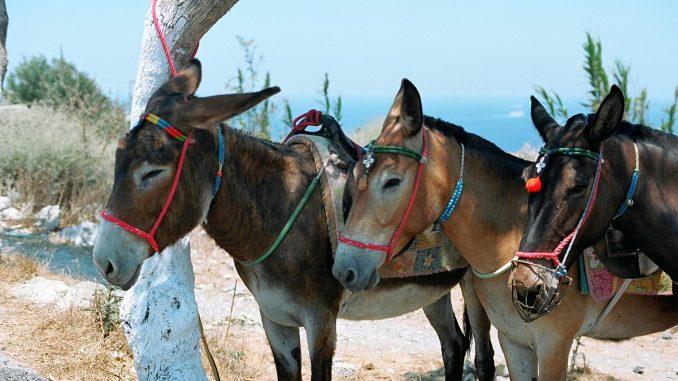 магарета в Санторини
